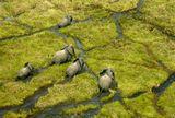 Южный Судан.Животные в естественной среде обитания...