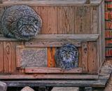 Китайская кошка.Снято в закрытом питомнике.