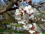 Крым, Севастополь, весна, пейзаж, цветы,