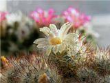 9 марта, за окном снег, а весна на подоконнике продолжается