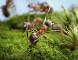 когда убивают муравья, он испытывает боль - жгучий стыд что не успел защитить, достроить или что ещё сделать для семьи