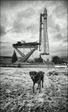Посвящение Лайке, Белке и Стрелке, первым собакам-космонавтам.  Москва, ВВЦ, 2008г.