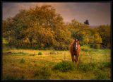Среди пахучей луговой травы  Недвижный он стоит, как изваянье. Стоит, не подымая головы. Сквозь дрему слыша птичье щебетанье.  Приятного просмотра!!! :-)