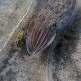 Еще снимки каракатицы здесь http://www.facebook.com/media/set/?set=a.3756022428048.2166824.1501107518&type=3&l=a87c364447