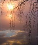 пруд, закат, туман, ветви берёзы......что ещё нужно человеку с камерой для счастья? :)