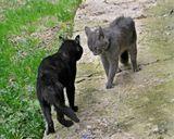 природа,животные,кошки,весна