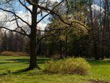 Весна. Ораниенбаум, парк.