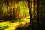 сказка лес природа
