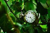 old, plants,  watch,  растения,  ivy, плющ, старые, pocket, watches, старинные, карманные, часы