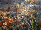 Вспоминая осень, первые заморозки