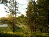 вечер,весна,дерево,лес,пейзаж,природа