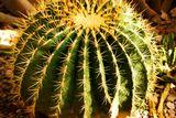 Ника Маркус я, в простонародье Хмурый Ангел http://www.lensart.ru/album-uid-1433-aid-2a02-sh-1.htm кому жизнь - буги-вуги, ну а мне - полный бред... мой девиз