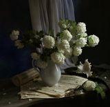 Калина бульденеж, цветы,раковина,элегия