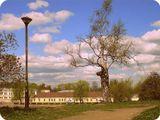 Выборг, весна, фонарь, берёза, площадь