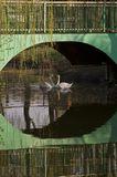 город,весна,пруд,лебеди