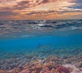 Орляковые (лат. Myliobatidae) — семейство крупных скатов, обитающих в отличие от своих сородичей не вдоль морского дна, а свободно плавающих в открытом море. Орляковые передвигаются с помощью волнистых движений своих плавников. Пятнистый Орляк (Aetobatus), Красное море
