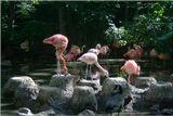 Эти фламинго на озере напомнили мне балетный спектакль с солистами на ПП и кордебалетом на ЗП.