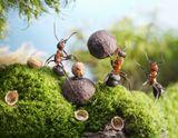 """недоучившийся муравей мешает отлаженному процессу, и поэтому молодых неучей не допускают к сложным и ответственым работам, выгоняют а то и загоняют в специально созданные отсеки - """"комнаты отдыха"""" :))"""
