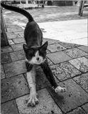 Кошек снимаю везде, без них город не город
