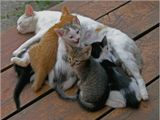 На крыльце. У двух кошек по три котёнка, пока одна занята своими делами, другая выполняет обязанности мамы за двоих.