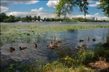 Лето река утки