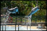 Порадовался за испанцев :)) Это же надо - уже при проектировании дельфинария подумать о фотографах, о том, чтобы солнце в момент представления было именно там, где надо!