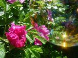 Мыльный пузырь и цветок шиповника