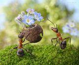 """Танюша, С Днём Рожденийа-а-а-а-а!!!Целуем, Твои муравьишкикак пользоваться конфетами: надо пощекотать тлю усиками, и она выдаст капельку нектара - медвяной росы...Усики переслать не можем, купишь в маскарадно-карнавальном шопе (кажется, называются """"пчелиные усики"""")))"""