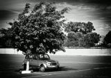 www.marshavin.com/galleryb/w Agadir Morocco car tree ч/б Агадир Марокко автомобиль дерево