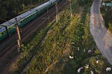 город,лето,поезд,козы,пастушка