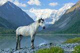 Горный Алтай, озеро Аккем, июнь-2012, 8 утра Приглашаю в горные фото-походы и авто-фото-туры! http://pohodnik.info