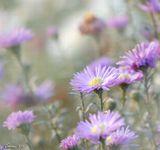 цветы природа осень