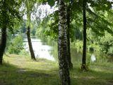 Берёза, река, утро.
