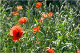 подарок для Танеки http://www.lensart.ru/gallery-uid-1823.htmС днём рождения, Танюшик!аленьких цветочков тебе - на счастье выбирай любой или все забирай )))
