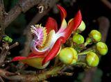 Ботанический сад на острове Мае.Сейшелы