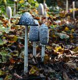 * * *природа,разное,грибы,осень