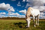 лошадь поле небо облака голубой зеленый белый село деревня
