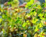 В сентябре, в сентябре Много листьев на земле Желтые и красные! Все такие разные!