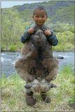 Злейшие враги оленеводов волки и медведи,  всегда сопровождающие оленье стадо.
