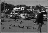 Деревенские голуби на автовокзале, пасмурно.