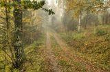 Туман, утро, осень, швеция, октябрь.