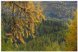 лиственница, осень, Альпы, Швейцария