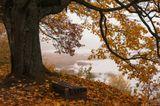 пейзаж,дерево,дуб,листя,туман,скамейка,сумерки,осень,Латвия