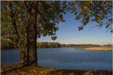 Дерево Вода Вечер Несвиж Осень Парк