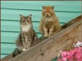 За что вы, девушки, так рыжих любите? А если серьезно, то эта красавица выбрала среди десятка молодых и красивых этого прожженого старого кота. Любовь...