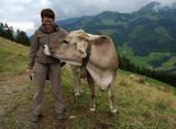 Встреча с доброжелательной альпийской бурёнкой
