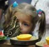 фото с выставки живых тропических бабочек в Гомеле