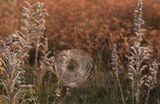 ...Паутинки наносит на листья...Благородный мотив седины,Захвативший всё в плен серебристый Снов осенних... До самой весны... Грустью соткан узор паутинный...Слёзным эхом сезонных дождей...Ко всему льнёт... Сетями унынья...Сиротливостью пасмурных дней... Паутинки фатой мягко вьются...Липкой... Цепкой... Омытой росой...Оплетая сердца, мысли, чувства Беспросветной осенней тоской... стихи Елены Буториной