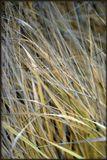 травы осенние.