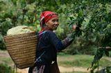 Северный Вьетнам. Провинция Lao Kai. В 10 киллометрах от маленького городка Сапа, есть деревня Зяо Та Фин, где проживают этнические племена,  такие как Красные Дао. Местное население бережет свои традиции и по сей день носит национальные костюмы